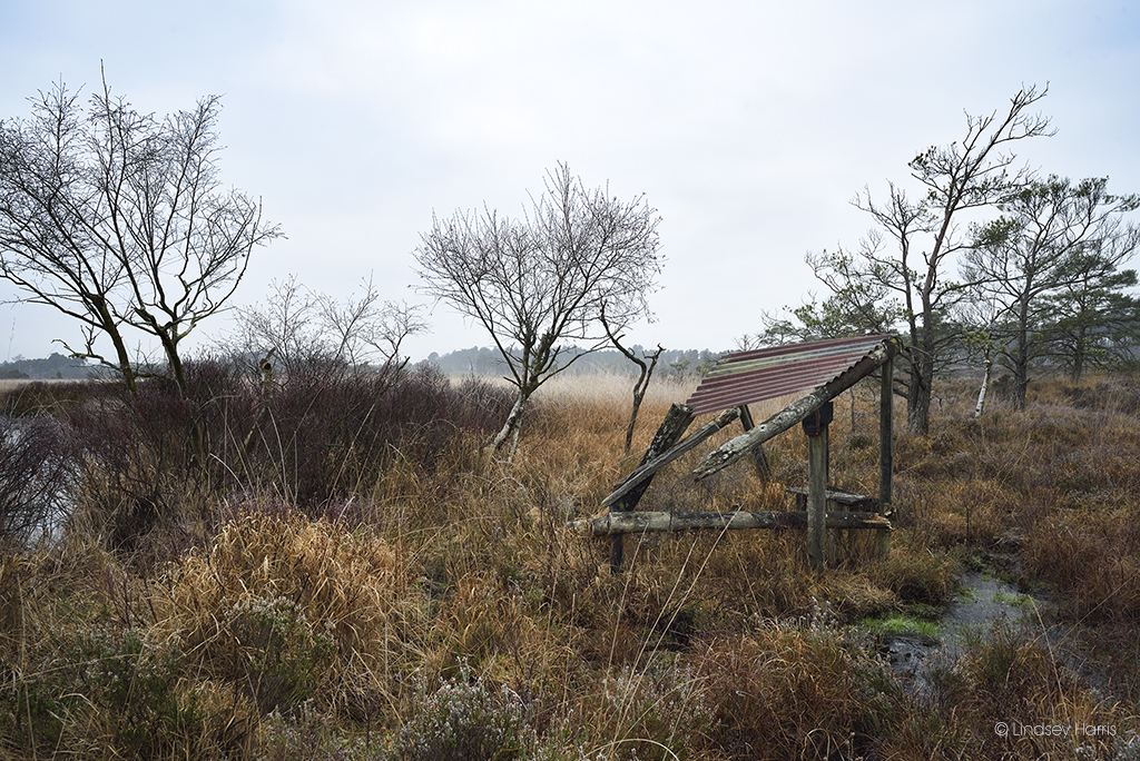 Number 1 hide at Old Decoy Pond, Morden Bog.