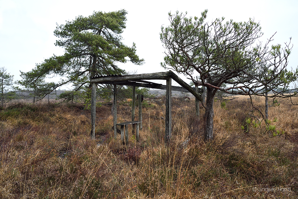 No 2 hide, Old Decoy Pond, Morden Bog National Nature Reserve, Dorset. You can still see the seat, wire and half a corrugated iron roof.No 2 hide, Old Decoy Pond, Morden Bog National Nature Reserve, Dorset. Still with seat, wire and half a corrugated iron roof.
