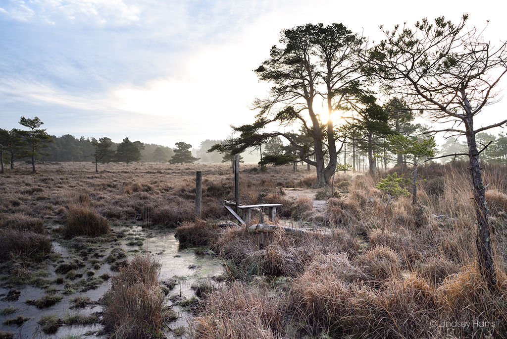 A seat is just about all that remains of bird hide number 7. A frosty morning at the Old Decoy Pond, Morden Bog National Nature Reserve, Dorset.