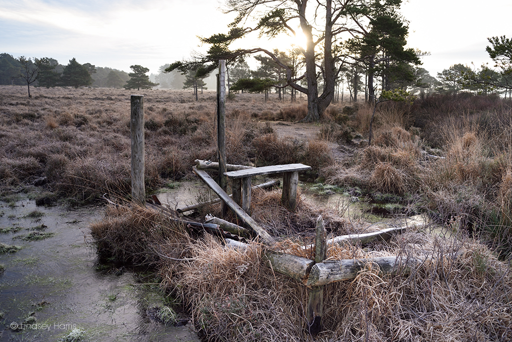 Close-up of all that's left of number 7 bird hide at Old Decoy Pond, Morden Bog.