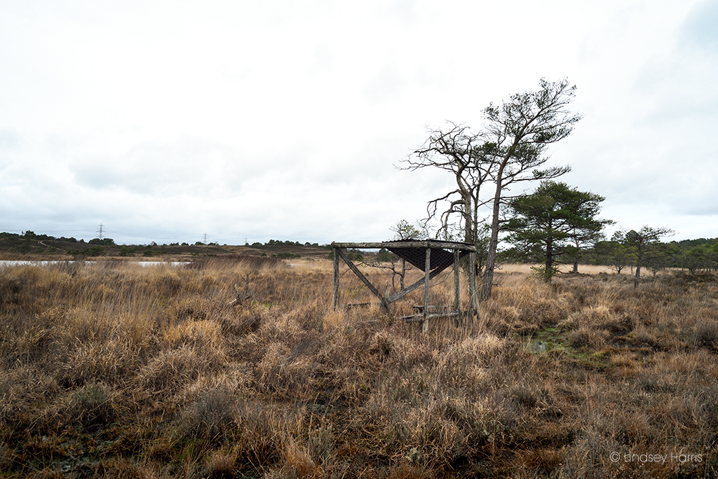Hide number 9, Old Decoy Pond, Morden Heath.