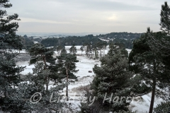 Looking towards Poole Harbour and the Purbecks across Parkstone Golf course, Poole.