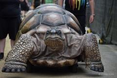 Zelva, a giant mechanical tortoise at Wickham Festival 2019.